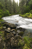 Winner Creek, Girdwood, Alaska Royalty Free Stock Photos