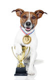 Winner dog Royalty Free Stock Photo