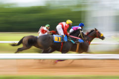 Winner of Horse Racing Royalty Free Stock Photography