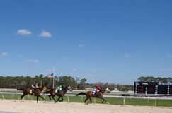 Winner, In a Moments Notice number 3, won the third race at the Tampa Bay Downs. Royalty Free Stock Photo