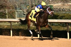 The winner is number four. Racehorse Theycallmeladyluck winning at Oaklawn in Hotsprings, AR Stock Images