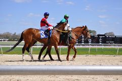 Winner of the Third race at Tampa Bay Downs is (In A Moments Notice). Royalty Free Stock Photography