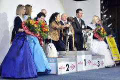 Winners of Dog Show. Grayhound #2 Stock Image