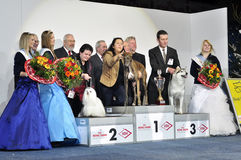 Winners of Dog Show. Grayhound Royalty Free Stock Photos