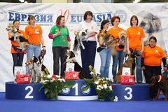 Winners at dogshow EURASIA 2011 Stock Image