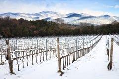 Winniców rzędy zakrywający śniegiem w zimie. Chianti, Florencja, Ita Obrazy Royalty Free
