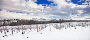Winniców rzędy zakrywający śniegiem w zimie Chianti, Florencja, Ita Obraz Royalty Free