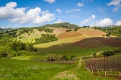 Winniców wzgórza Zdjęcie Royalty Free