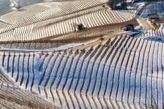 Winniców wzgórza pod śniegiem w Langhe regionie w Włochy Obraz Royalty Free