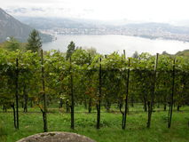 winnic w Lugano Obrazy Royalty Free