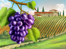 Winnica royalty ilustracja
