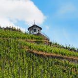 Winnica blisko Bernkastel-Kues przy rzecznym Moselle Zdjęcia Stock