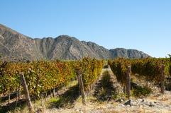 Winnica Cafayate, Argentyna - zdjęcie stock