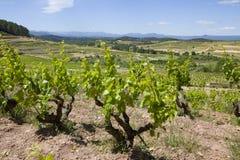 Winnica, Catalonia fotografia royalty free