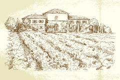 Winnica Francja Zdjęcia Royalty Free