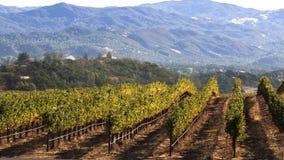 Winnica i góry Zdjęcia Royalty Free