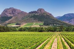 Winnica i góry w Franschhoek miasteczku, Południowa Afryka fotografia stock