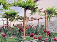 Winnica i róże w ogródzie Obraz Royalty Free