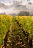 winnica jesienią Zdjęcia Royalty Free