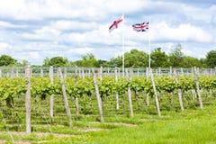 Winnica, Kent, Anglia Zdjęcie Stock