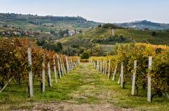 Winnica Langhe w jesieni Zdjęcie Royalty Free