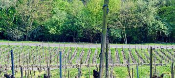 Winnica Lohrberg Frankfurt, magistrala,/, Niemcy obraz stock