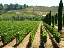 winnica napa valley Fotografia Stock