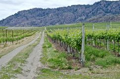 Winnica, Okanagon wina kraj, kolumbiowie brytyjska, kanadyjczyk obrazy stock