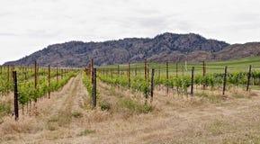 Winnica, Okanagon wina kraj, kolumbiowie brytyjska, kanadyjczyk zdjęcia royalty free