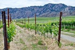 Winnica, Okanagon wina kraj, kolumbiowie brytyjska, kanadyjczyk zdjęcie stock