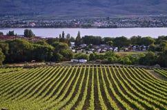 Winnica, Okanagon wina kraj, kolumbiowie brytyjska, kanadyjczyk zdjęcie royalty free