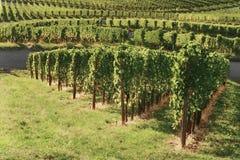 Winnica panoramy weinstadt Obraz Royalty Free