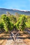 Winnica Pole gronowy drzewa gospodarstwo rolne Natura krajobraz Provence Obrazy Royalty Free
