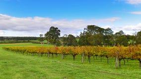 Winnica przy Margaret rzeką, Australia fotografia royalty free