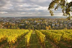 Winnica przy Neroberg wzgórzem obraz royalty free