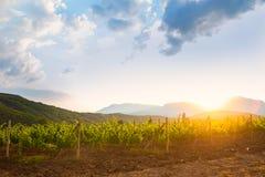 Winnica przy wschodem słońca Obraz Royalty Free