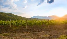 Winnica przy wschodem słońca Zdjęcie Royalty Free