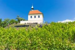 Winnica stKlara blisko górskiej chaty Troja, Praga, republika czech Zdjęcie Royalty Free