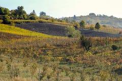 Winnica używać dla produkci Włoski wino obraz stock