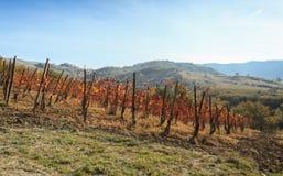 Winnica używać dla produkci Włoski wino zdjęcia stock