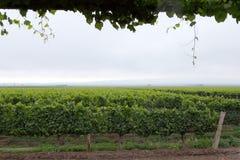 Winnica, Uco dolina, Mendoza Zdjęcia Stock