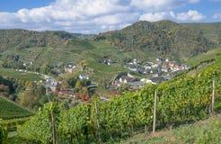 Winnica w ahr dolinny pobliski Zły Neuenahr, Niemcy Zdjęcia Royalty Free