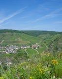 Winnica w ahr dolinny pobliski Zły Neuenahr, Niemcy Zdjęcia Stock