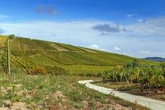 Winnica w Alsace, Francja zdjęcia stock