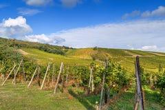 Winnica w Alsace, Francja zdjęcie royalty free