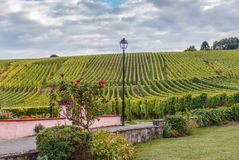 Winnica w Alsace, Francja Obrazy Stock