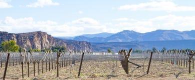 Winnica w budowie w suchym terenie Południowa Afryka wzdłuż Pomarańczowego Rzecznego obrzeżnego Namibia Zdjęcie Stock