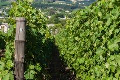 Winnica w Capetown Fotografia Stock