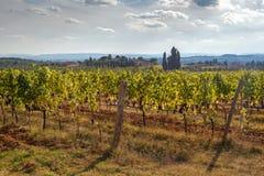 Winnica w Chianti terenie Zdjęcie Royalty Free