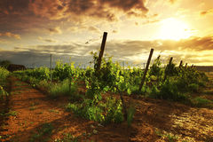Winnica w France Zdjęcie Stock